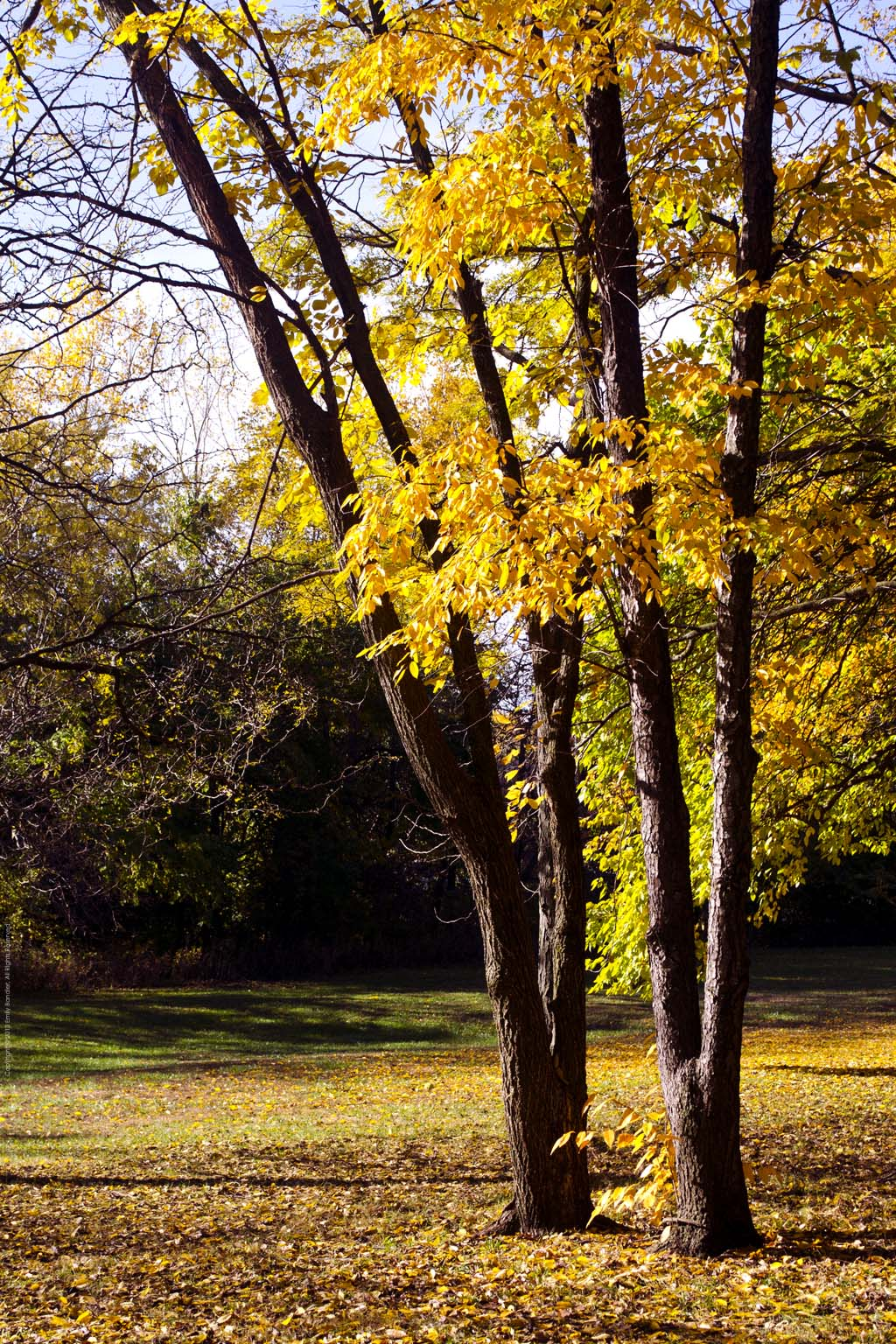 Two Trees Copyright © 2013 Emily C. Bandler, All Rights Reserved.